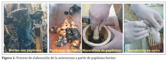 Virus del papiloma bovino vacuna, Papilomatosis bovina vacuna, Human papillomavirus 16 treatment